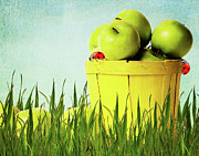 Green Blade Of Grass Posters - Apple Poster by Angela Doelling AD DESIGN Photo and PhotoArt