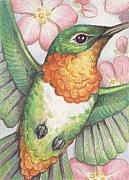 Apple Drawings Framed Prints - Apple Blossom Hummer Framed Print by Amy S Turner