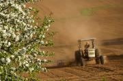 In Depth Framed Prints - Apple Blossoms And Farmer On Tractor Framed Print by John Sylvester