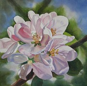 Apple-blossom Paintings - Apple Blossoms by Sharon Freeman
