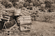 Apple Crates Framed Prints - Apple Crates Sepia Framed Print by JC Findley