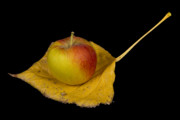 Striking Photography Metal Prints - Apple Harvest Autumn Leaf Metal Print by James Bo Insogna