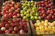 Fresh Market Framed Prints - Apple Harvest Framed Print by Garry Gay