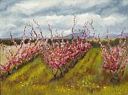 Apple-blossom Paintings - Apple Hill Springtime by Brenda Williams