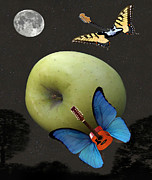Blue Butterfly - Apple Rhythm  by Eric Kempson
