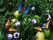 Blue Butterfly - Apple Rocks by Eric Kempson