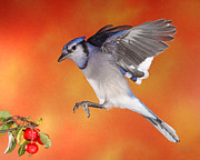 Small Birds In Flight Posters - Apple Thief Poster by Gerry Sibell