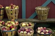 Baskets Framed Prints - Apple Time Framed Print by Ross Powell