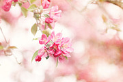 Crab Apple Tree Blossoms Prints - Apple Tree in Spring Print by Stephanie Frey