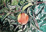 Sketchbook Painting Prints - Apple Tree Sketchbook Project Down My Street Print by Irina Sztukowski