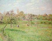 Farm Fields Framed Prints - Apple Trees at Gragny Framed Print by Camille Pissarro
