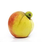Apple With An Excrescence Print by Bernard Jaubert