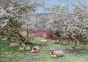 Hill Painting Framed Prints - Appleblossom Framed Print by William Biscombe Gardner