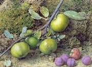 Fruit Still Life Posters - Apples and Plums on a Mossy Bank Poster by John Sherrin