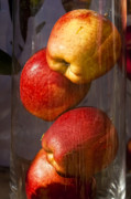 Food - Apples in a Jar by Robert Ullmann