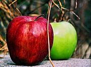 Apple Photos - Apples by Karen M Scovill