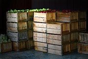 Apple Crates Framed Prints - Apples On Order Framed Print by Chris  Mautz