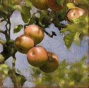 Apple Digital Art Posters - Apples on Wood Panel Poster by Simon Sturge