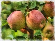Apples Digital Art Prints - Apples Painterly Print by Ernie Echols