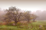 Apples Trees In The Mist Print by Sandra Cunningham
