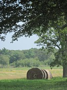 Appleton Framed Prints - Appleton Farm Hay Season Framed Print by Barbara Milhender