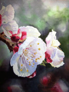 Green Painting Originals - Apricot Flowers by Irina Sztukowski