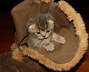 Kitten Pyrography Prints - April 2010 Print by Robert Morin