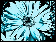 Cards Digital Art - Aqua Daisy Blue by Marsha Heiken
