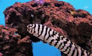 Aquarium Art 14 Print by Steve Ohlsen