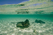 Turks And Caicos Islands Photos - Aquatic Split-level View Of Two by Wolcott Henry