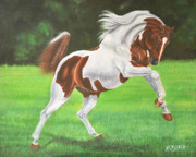 Animals Drawings - Arab Pinto joy movement by Julian T Arboleda