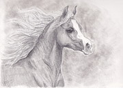 Pony Drawings Originals - Arab Pony by Emily Dieleman