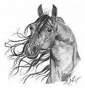 Horse Drawings Posters - Arabian Head Poster by Gail Finger