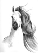 Horse Images Drawings Posters - Arabian Horse Poster by Cheryl Poland