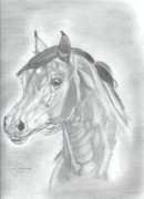 Wild Horses Drawings Originals - Arabian Horse by Don  Gallacher