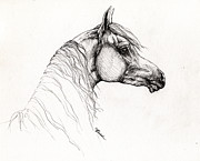 Horses Drawings - Arabian Horse Drawing 11 by Angel  Tarantella