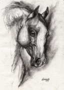 Head Drawings Prints - Arabian Horse Drawing 12 Print by Angel  Tarantella