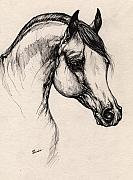 Horse Drawing Posters - Arabian Horse Drawing 24 Poster by Angel  Tarantella