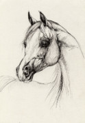 Animals Drawings Posters - Arabian Horse Drawing 27 Poster by Angel  Tarantella
