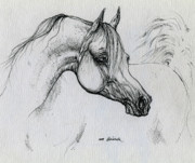 Animals Drawings - Arabian Horse Drawing 28 by Angel  Tarantella