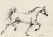 Grey Drawings Originals - Arabian Horse Drawing 31 by Angel  Tarantella