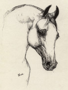 Arabian Horse Art Posters - Arabian Horse Drawing 32 Poster by Angel  Tarantella