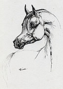 Horses Drawings Metal Prints - Arabian Horse Drawing 39 Metal Print by Angel  Tarantella