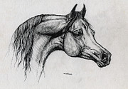 Horses Drawings - Arabian Horse Drawing 40 by Angel  Tarantella