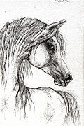 Horse Drawing Posters - Arabian Horse Drawing 56 Poster by Angel  Tarantella