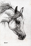 Horse Drawing Posters - Arabian Horse Drawing 57 Poster by Angel  Tarantella
