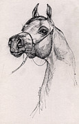 Equine Drawings - Arabian Horse Drawing 59 by Angel  Tarantella