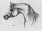Arabian Drawings - Arabian Horse Drawing 62 by Angel  Tarantella