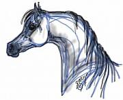 Stacey Mayer - Arabian Horse in Grey
