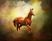 Animal Art Photo Prints - Arabian Horse Print by Jai Johnson